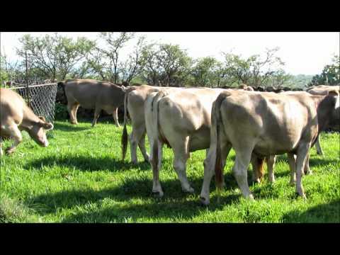 ganado bovino veracruz: