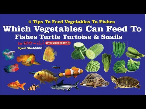 Which Vegetables Can Feed To Fish & Turtle How To Feed Veggies To Fish