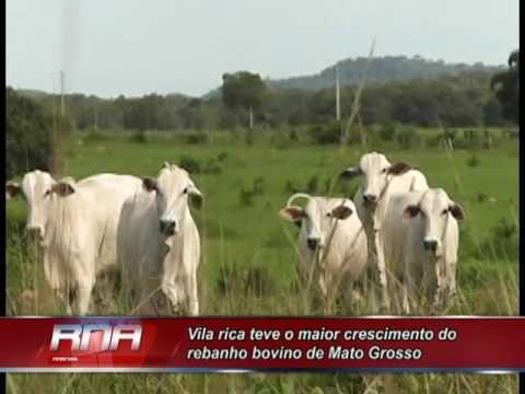 Vila rica e o município que teve o maior crescimento do rebanho bovino de Mato Grosso