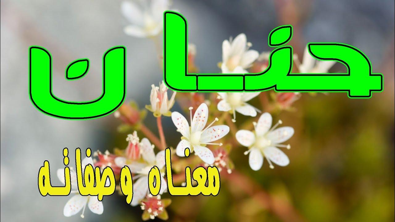 معنى اسم حنان و صفات حاملة هذا الإسم Youtube