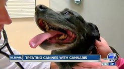 CBD Oil for pets with arthritis, epilepsy and seizures