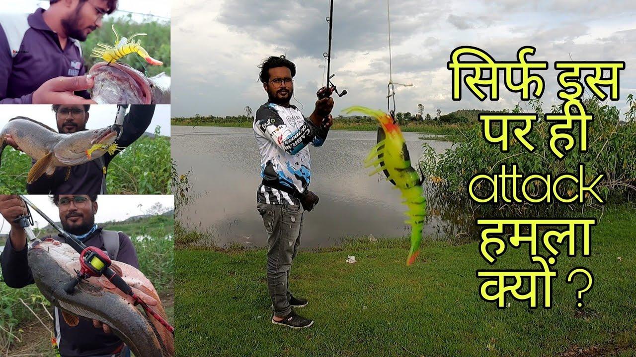 🦐 झींगे पर आखिर इतना snakehead मरल मछली क्यों लग रहा है! biggest snakehead fish || fish hunting