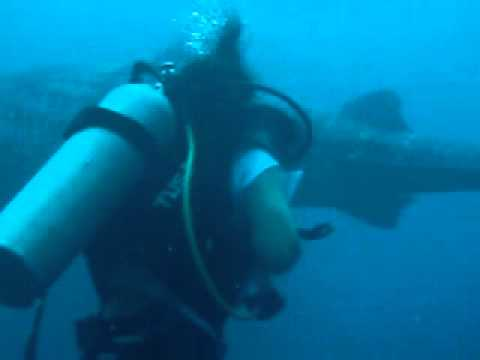 Diving with a whale shark in Jagna, Bohol, Philippines with Drift Divers