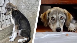 Scared rescue dog from shelter to home
