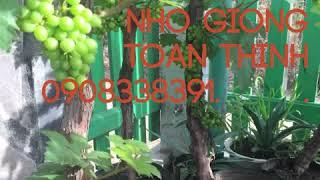 Cây lạ bán tết 0908338391 thumbnail