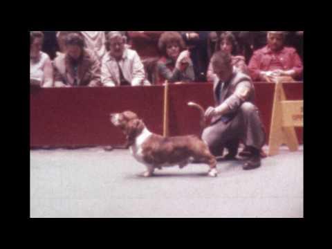 Westminster 1976 Basset Hound