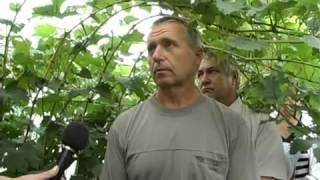 Агрошкола Семинар Виноград у Владимира Телеги часть 1