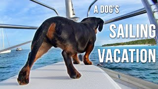 A DOG'S BEST VACATION! - Crusoe Dachshund Goes Sailing in Bahamas! 😎