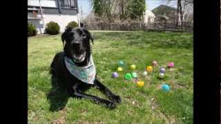 My Dogs Easter Egg Hunting Thumbnail