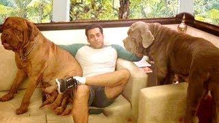 INSIDE Salman Khan's Panvel Farmhouse 2018 Unseen Video