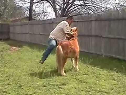 domando un pony salvaje ....