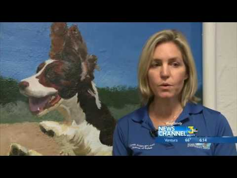 Santa Barbara Rehabilitation Center Help Hundreds of Dogs
