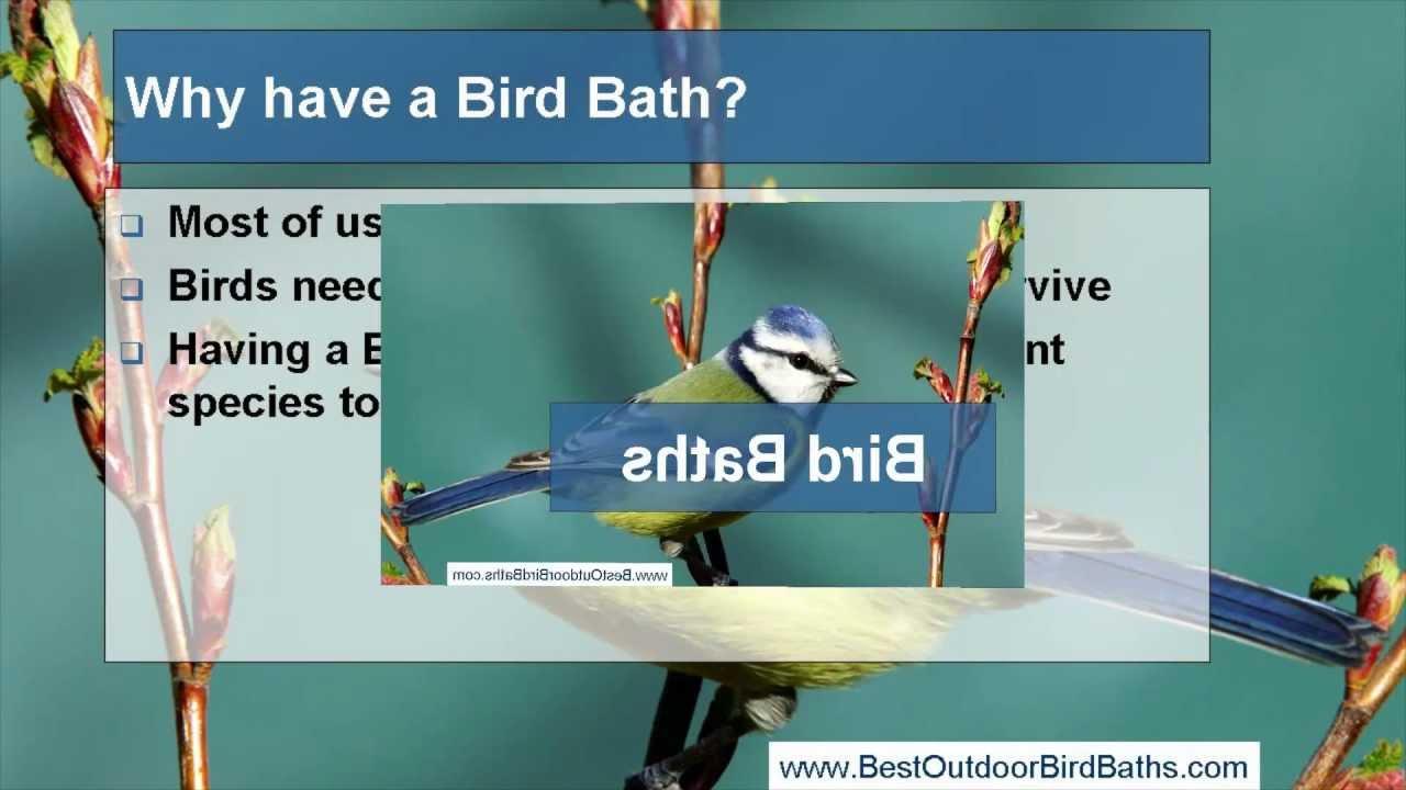 Bird Baths: Bird Bath Tips - Perth Joondalup Australia - YouTube