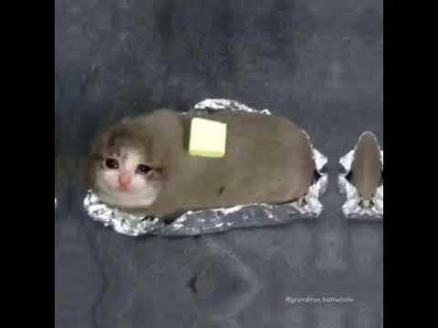 Just Right Meme Cat