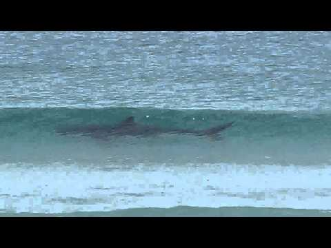 Cape Town, South Africa | Great White Shark (October 2011)