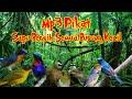Suara Pikat Burung Ribut Untuk Semua Jenis Burung Kecil Sirtu Prenjak Kolibri Dll  Mp3 - Mp4 Download
