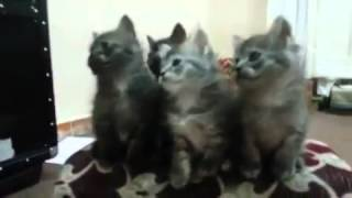 Happy Eid Mubarak w/cats dancing by Donnie