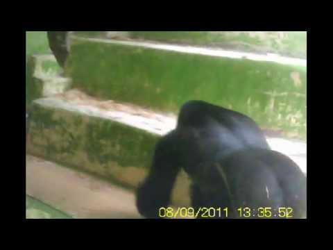 gerald durrell animal park st peter jersey