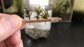 moss garden how to grow moss garden indoor gardening growing flowers plainting plants