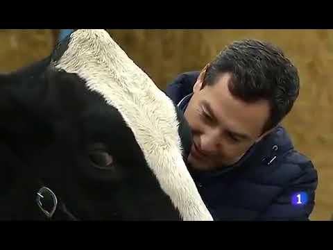 Juanma Moreno pide el voto a una vaca