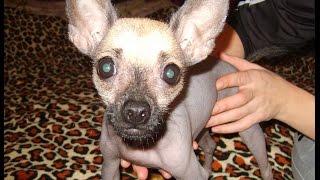 Глисты у собак. Принципы лечения и профилактики глистов у собак