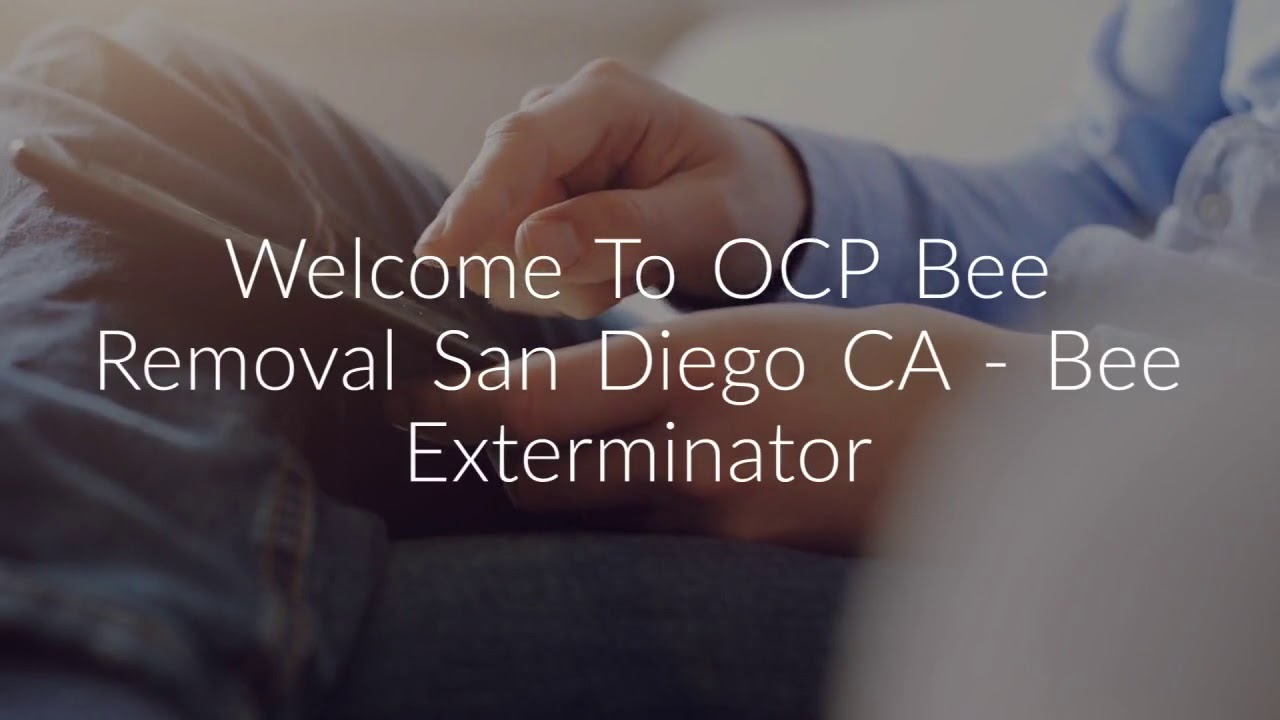 OCP Bee Removal Service in San Diego, CA