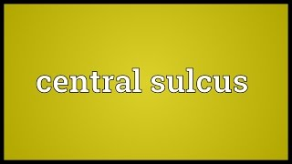 Central sulcus Meaning
