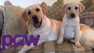 Mum And Puppy Love | Puppy Awareness Week