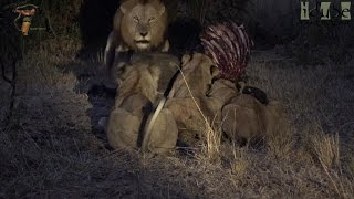 LIONS: Following The Pride 71: Trying To Reclaim Their Meal