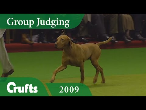 Hungarian Vizsla wins Gundog Group Judging at Crufts 2009 | Crufts Classics