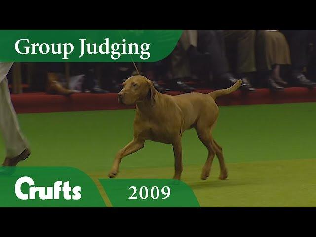 Hungarian Vizsla wins Gundog Group Judging at Crufts 2009 | Crufts Classics