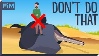 Why dead Whales are so dangerous