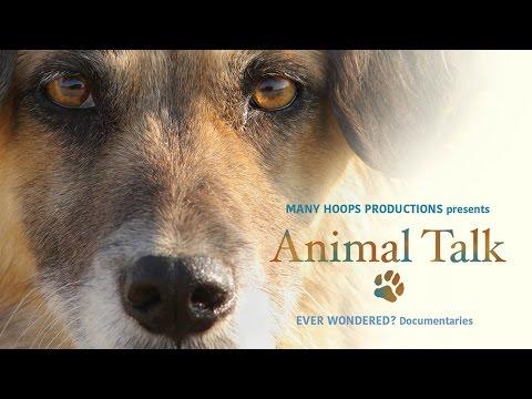 Animal Talk - Trailer