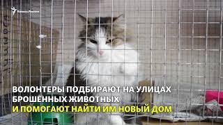 Как живет приют для животных в Ставрополе