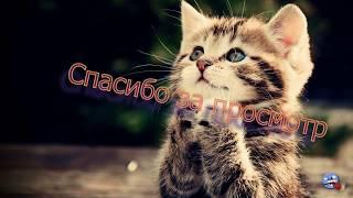 Самое смешное видио. Приколы с котами, смешные видео про животных, смешные кошки и коты.
