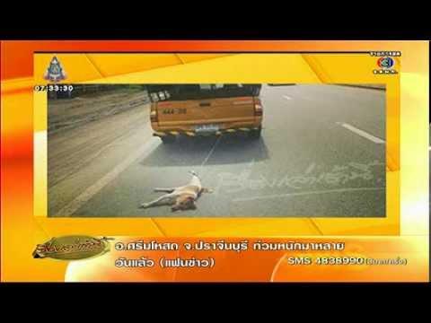 กรมทางหลวงแจงเหตุกระบะผูกเชือกลากสุนัข กลัวรถเปื้อนคราบเลือด เรื่องเล่าเช้านี้