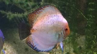 * Photo montage du grand aquarium de Touraine * - koala vlog -