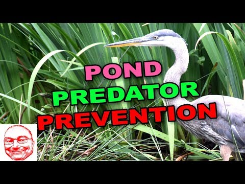 Protect Your Pond From Predators.