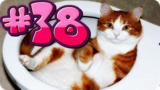 Приколы с животными №38   Кот упал в унитаз  Смешные животные  Animal videos
