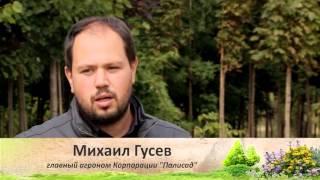 Правила посадки деревьев. Советы и секреты. Выпуск 8