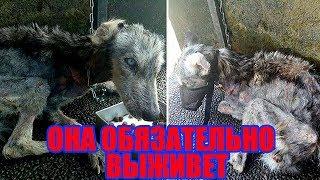Парень подобрал умирающее бездомное животное| Спасение хаски | Спасение собаки | Спасение животных |