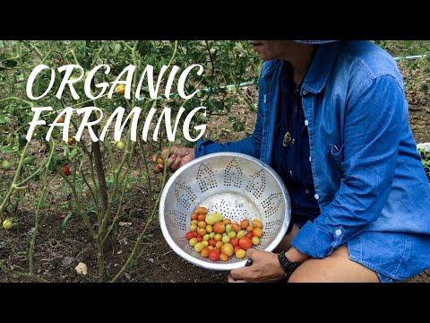 GETTING TO KNOW ORGANIC FARMING | VLOG 64