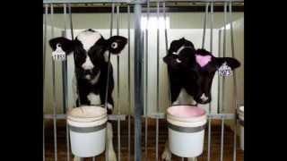 Zoocentrisme - Abolition de l'exploitation animale