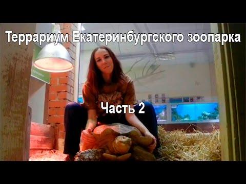 Террариумный комплект для пятнистого эублефара - MINI - YouTube