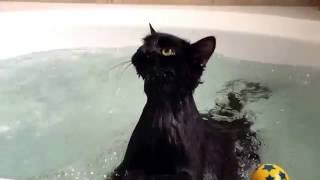 Cute cat relaxing in a jacuzzi tub