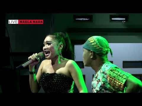 Wakoplak Sama WAndi lg Rebutan Kiriman - Melek Wadon - Desi Paraswati - NAELA NADA Live Gebang Kulon