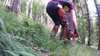 Felling spruce tree