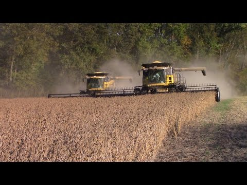 New Holland CR8090 Combines Harvesting Double Crop Soybeans