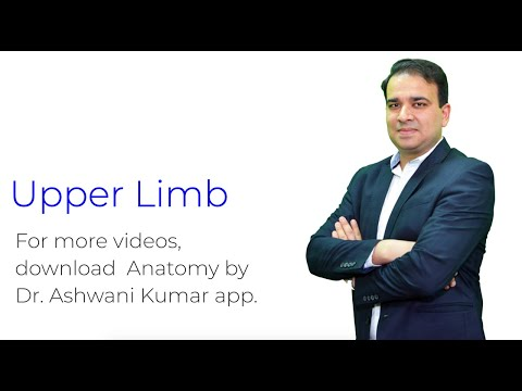 UPPER LIMB (PART 1)