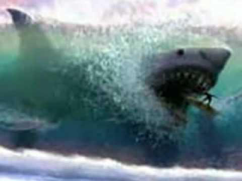 The Real Monster Sharks - Megalodon is Real? - YouTube